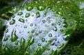 Fotografia: Zarosená rastlina, fotograf: Andrej Lezo, tagy: rastlina