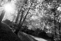Fotografia: Jesen v Parku Štefana Moyzesa v ZH, fotograf: Martin Pauco, tagy: park, jeseň