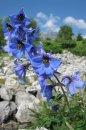 Fotografia: skoro ma porazilo, kým to ten systém zobral, fotograf: Milos Blasko, tagy: kvetina, tatry