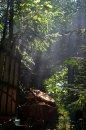 Fotografia: Hra lúčov, fotograf: Peter Dulacka, tagy: les, stromy, lúče, svetlo