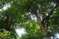 Fotografia: Keď sa pozrieme hore..., fotograf: Peter Dulacka, tagy: les, svetlo, stromy
