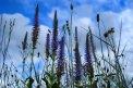 Fotografia: žiarivá vôňa rannej lúky, fotograf: Matúš Michalko, tagy: lúka, rastliny, kvet