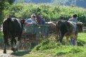 Fotografia: prázdniny v Rumunsku, fotograf: Juraj Štefanovič, tagy: poľné práce