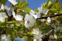 Fotografia: Rozkvitnutá Šírava, fotograf: Jakub Mana, tagy: kvet,príroda,jar