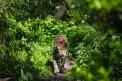 Fotografia: O-ou.., fotograf: Daniel Svonava, tagy: macka, 100mm f2.8