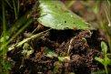 Fotografia: Mravce, fotograf: Lukáš Bolgáč, tagy: Mravce, priroda, rastliny