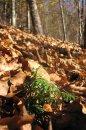 Fotografia: Sila malých a slabosť veľkých..., fotograf: Ján Lang, tagy: lístie, stromy, ihličie