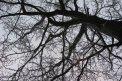 Fotografia: Neurón?, fotograf: Ján Lang, tagy: strom
