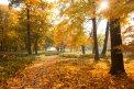 Fotografia: žltá!, fotograf: Martin Lačný, tagy: jesen,stromy,les,park,zlta,
