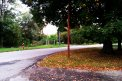 Fotografia: pod stromom, fotograf: Filip Hasak, tagy: strom