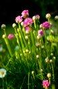 Fotografia: Ružové krásky, fotograf: Andrej Lenčucha, tagy: kvety