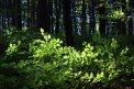 Fotografia: listy a lístky, fotograf: Juraj Štefanovič, tagy: les, hory, slnko