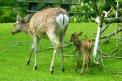 Fotografia: Malý a veľký., fotograf: Ľuboš Demovič, tagy: jeleň, jeleniatko, jelenča