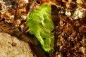 Fotografia: Stopy jesene, fotograf: Robert Cerny, tagy: list, potok, svetlo, voda