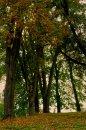 Fotografia: Ranný park, fotograf: Peter Vilhan, tagy: Stromoradie v Trebeľovskom parku