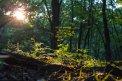 Fotografia: Budúci les pod ochranou toho súčasného, fotograf: Matúš Michalko, tagy: Strom, slnko, les