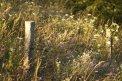Fotografia: Lúka, fotograf: Jana Mikitová, tagy: lúka, kvety, ostnatý drôt