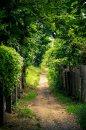 Fotografia: Kamže vedieš ?, fotograf: Marek Duranský, tagy: cesta, stromy, plot