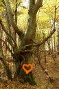 Fotografia: V máji, fotograf: Lýdia Šimková, tagy: máj, láska, v lese