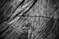 Fotografia: V lese, fotograf: Silvia Budayová, tagy: les, strom, kmeň, detail
