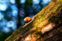 Fotografia: Cez zlatú hodinku., fotograf: Denis Goga, tagy: zlatá hodinka, slimák, príroda, bokeh, mach, strom