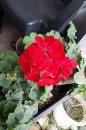 Fotografia: kvety, fotograf: Richard Halak, tagy: ....