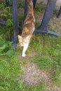 Fotografia: Pôvab, fotograf: Dominik Farba, tagy: mačka