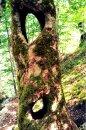 Fotografia: Čarovný strom, fotograf: Peter  Hudeček, tagy: strom