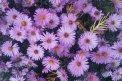 Fotografia: Kvety, fotograf: Tomáš Čaputa, tagy: kvety