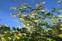 Fotografia: zahrada, fotograf: René Bendik, tagy: zahrada, strom, listy