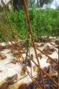 Fotografia: Vážka v záhrade, fotograf: Dominik Wsól, tagy: Vážka