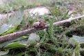 Fotografia: Pavúk, fotograf: Viktor Žáčik, tagy: spider, pavúk, drevo