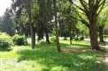 Fotografia: V parku, fotograf: Martin Mackovič, tagy: Stromy