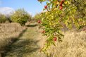 Fotografia: Jeseň v Modre /originál foto: https://goo.gl/dJgZ, fotograf: Tomas Gloznek, tagy: jesen, modra, priroda