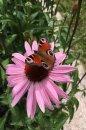 Fotografia: Motýľ, fotograf: Ivan Kamas, tagy: #motyl