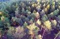 Fotografia: Čaro našej vlasti, fotograf: Dominika Dolhá, tagy: les, priroda, stromy, strom