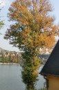 Fotografia: strom, fotograf: Erik Schwarz, tagy: strom