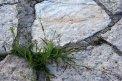 Fotografia: Život vznikol v kameni, fotograf: Lýdia Šimková, tagy: kameň, nový život, rastlinka