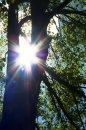 Fotografia: Krása v parku, fotograf: Lýdia Šimková, tagy: strom, slnko, park, Medická záhrada