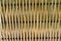 Fotografia: stena, fotograf: Linda Dobosová, tagy: bambus