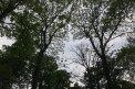 Fotografia: zeleň, fotograf: Linda Dobosová, tagy: stromy