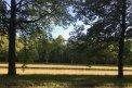 Fotografia: stromy, fotograf: Linda Dobosová, tagy: stromy