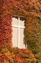 Fotografia: Farebná jeseň v okolí okna na 2. poschodí, fotograf: Lýdia Šimková, tagy: jeseň, okno, farebnosť