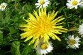 Fotografia: Púpava, fotograf: Tomáš Škriečka, tagy: kvet