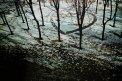 Fotografia: Stopy v snehu...autor neznamy., fotograf: Dusan Lamos, tagy: sneh, stopy, odkaz