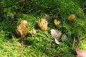 Fotografia: hríbiky, fotograf: Petra Vrablecova, tagy: hríby, príroda, jeseň, mach