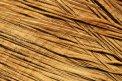 Fotografia: Štruktúra rezu dreva, fotograf: Štefan Majtán, tagy: strom, štruktúry