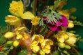 Fotografia: Nastane konečne tento rok jar?, fotograf: Roman Stovicek, tagy: kvet,jar,farba