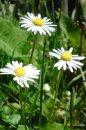 Fotografia: traja bratia alebo tri sestry?, fotograf: Stefan Schwartz, tagy: mobil, kvety
