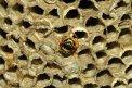 Fotografia: Zrodenie života, fotograf: Ladislav Šinka, tagy: hmyz